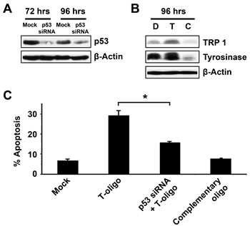 T-oligo induced differentiation and apoptosis in melanoma is dependent upon the presence of p53.