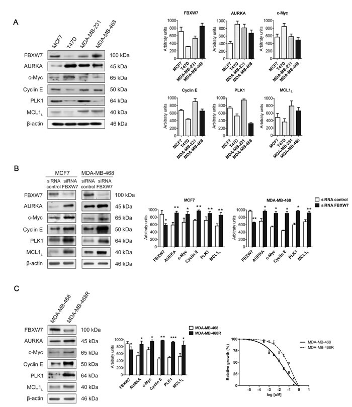 Expression of FBXW7 and its substrates in breast cancer cell lines.