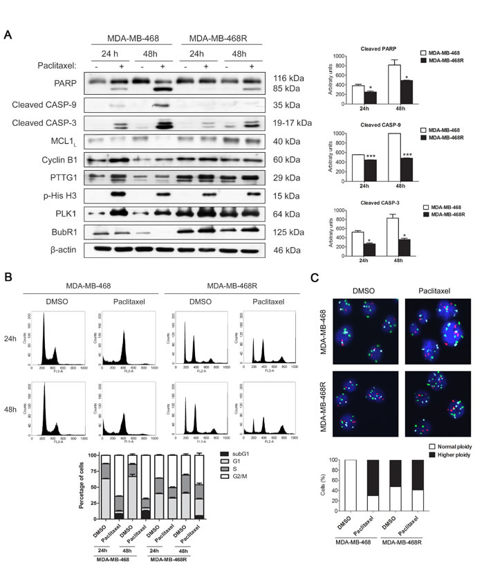 Paclitaxel-induced apoptosis and cell cycle analysis of MDA-MB-468 and MDA-MB-468R cells.