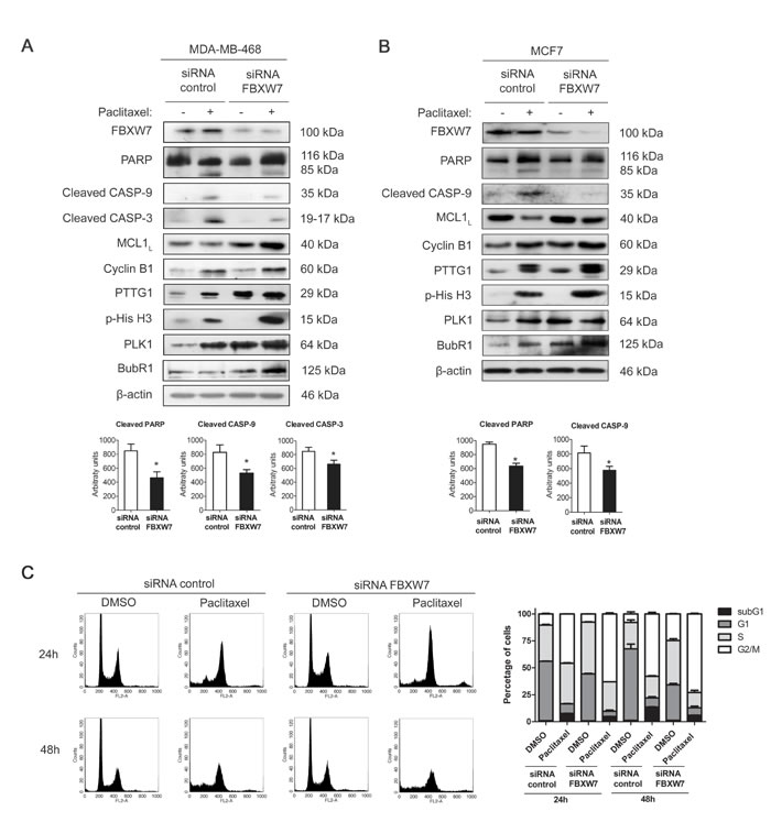 FBXW7 downregulation induces mitotic arrest and resistance to paclitaxel in MDA-MB-468 and MCF7 cells.