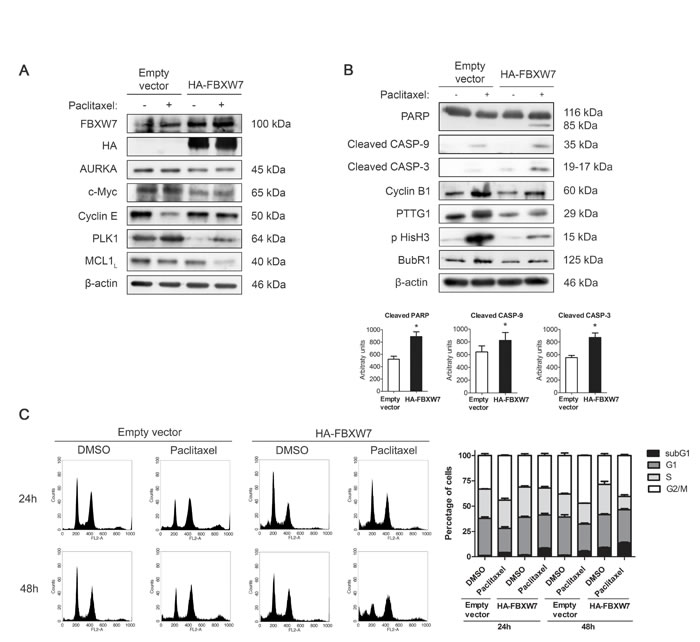 FBXW7 overexpression restores sensitivity to paclitaxel in resistant MDA-MB-468R cells.
