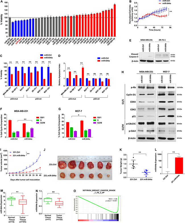 miR-644a reduces the viability of breast cancer cells in vitro and in vivo and miR-644a expression or its gene signature is associated with tumor progression in breast cancer.