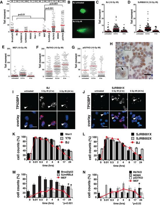 Analysis of dsDNA-Break Repair in Retinoblastoma.