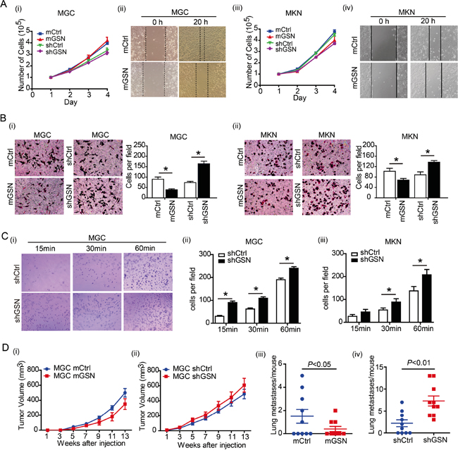 Gelsolin suppress the migration of gastric cancer cells in vitro and in vivo.
