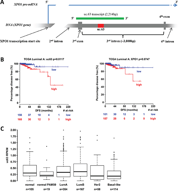 Bionformatic analysis of uc.63 expression in breast cancer patients.