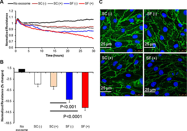 Effect of plasma-derived exosomes on Electric Cell-substrate Impedance Sensing (ECIS) and confocal microscopy imaging.