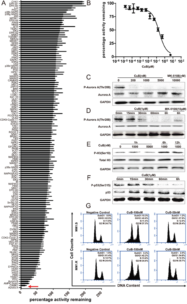 CuB is a novel potent Aurora A kinase inhibitor.