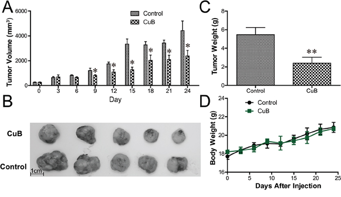 CuB inhibits growth of human MM xenograft tumors in SCID mice.