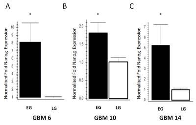 Increased nanog expression in EG-BTSCs compared to LG-BTSCs.