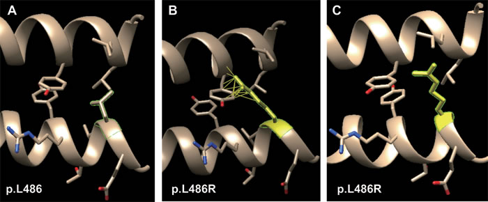 Molecular dynamics snapshot of the effects for point mutations (p.L486R of