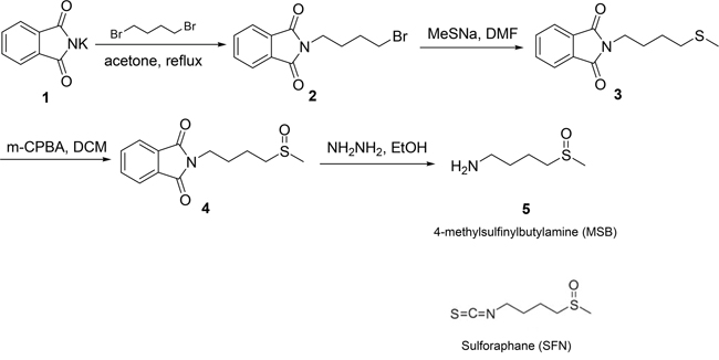 Chemical structures of SFN and MSB, and the synthetic process of MSB.