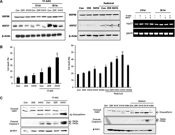 The xanthone compound induced sensitization to cancer cells in combination with HSP90 inhibitors.