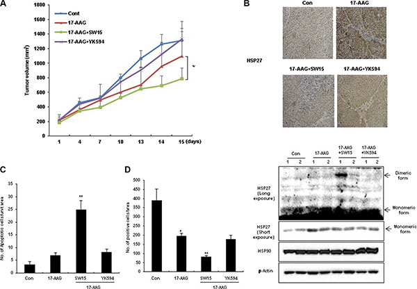 The xanthone compound showed synergistic regression effects to xenografted tumors in combination with HSP90 inhibitors.