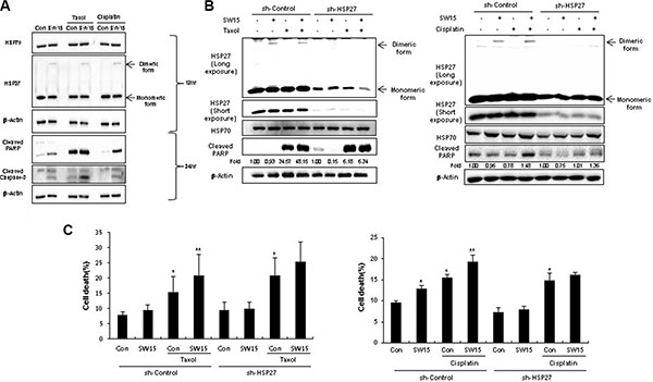 The xanthone compound induced sensitization to cancer cells in combination with conventional anticancer drugs.