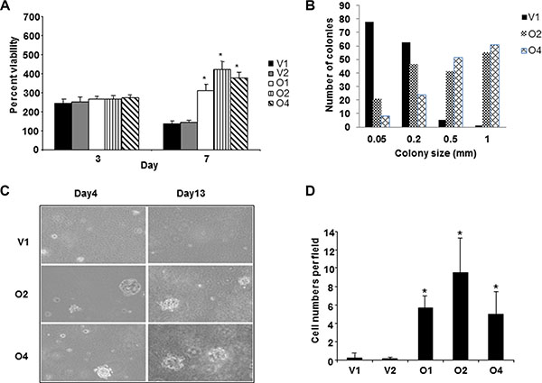Overexpression of BP1 in MCF-7 cells is associated with aggressiveness.