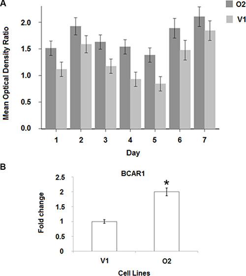 BP1 increases tamoxifen resistance.