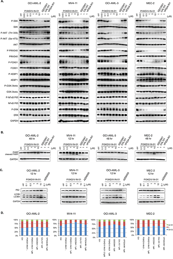 Effect of PI3KD/V-IN-01 on cellular signaling, cell cycle progression, and autophagy.