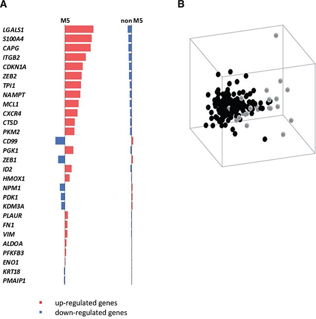 A HIF-1α sub-signature regulating cell motility acts as an AML-M5 class predictor.