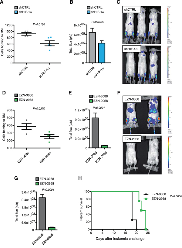 HIF-1α inhibition impairs leukemia homing and progression in MOLM-13 xenograft model in vivo.