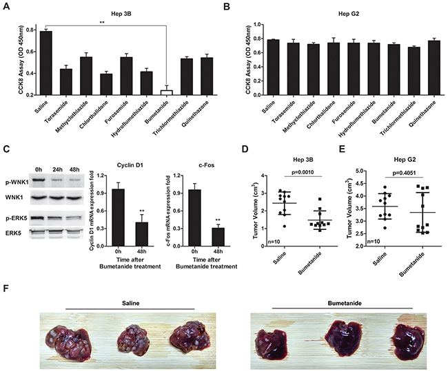 Bumetanide inhibits growth of SLC12A1-postive cells in vitro and in vivo.