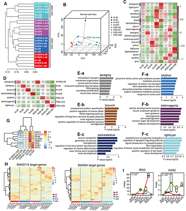 Altered global transcriptomes and dysregulated neural transcriptomes in PKD cells during a step-wise neural induction.
