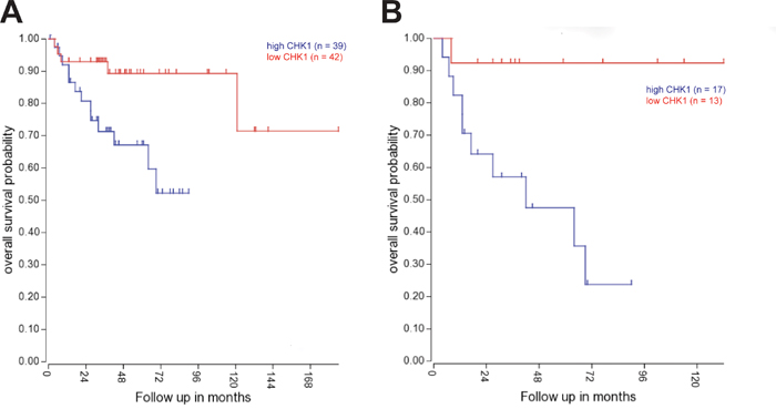 CHK1 expression is correlated with adverse outcomes in medulloblastoma patients.