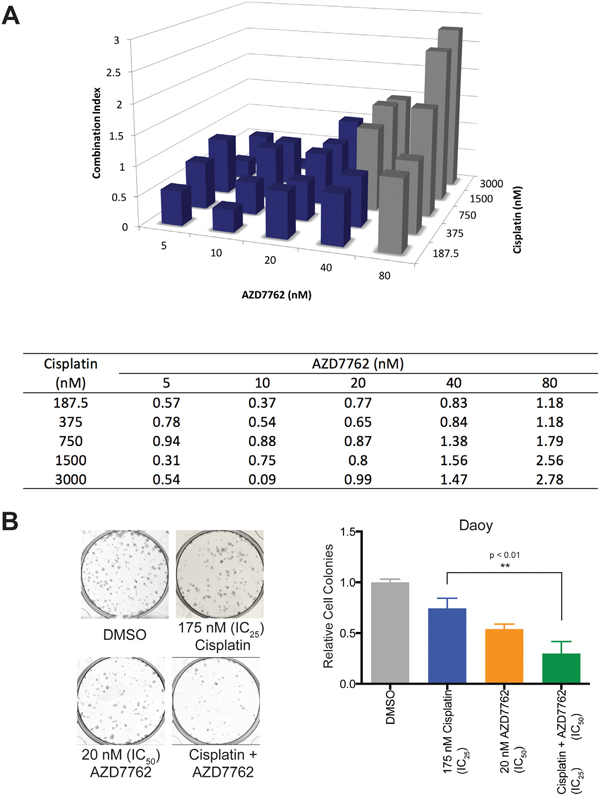 Treatment of Daoy cells with AZD7762 acts in synergy with cisplatin to reduce cellular proliferation.