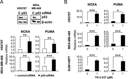 The effect of mtp53 depletion and YK-3-237 on the expression of WTp53-target genes in TNBC cell lines.
