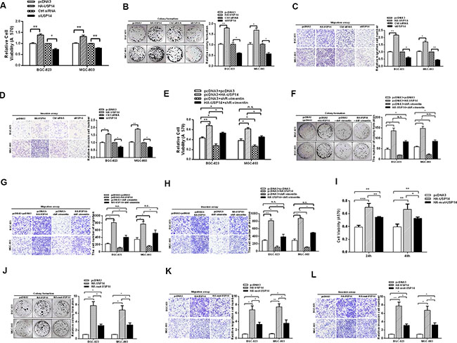 USP14 increases the malignant behavior of gastric cancer cells.