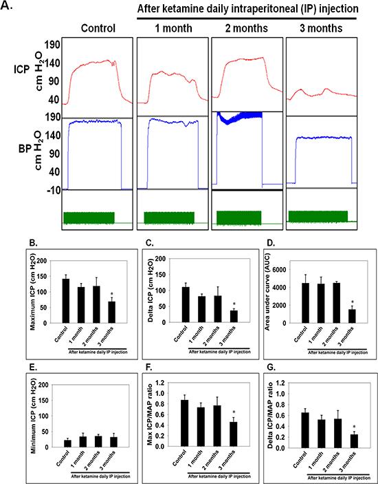 Electrostimulation of cavernous nerves after administration of ketamine for 1, 2 and 3 months.