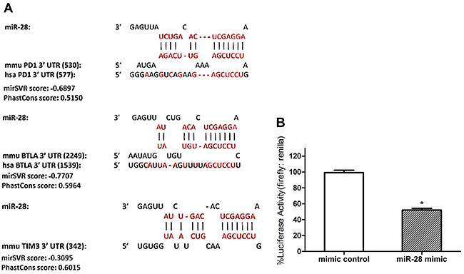 Defining the potential targets of exhaustion-associated inhibitory receptors PD1 by miR-28.