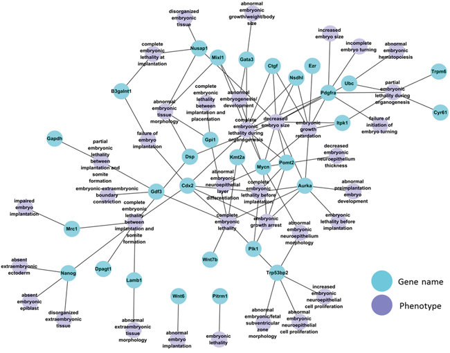 Network of 30 DDEGs with known embryonic phenotype in gene knockout mouse models.