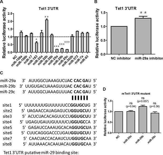 miR-29a/b/c target Tet1 via direct binding to 3′UTR in vitro.