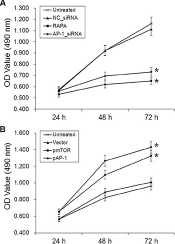 Effects of AP-1 or mTOR inhibition and overexpression on aortic endothelial cell proliferation.
