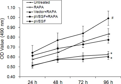 Effects of mTOR inhibition and VEGF overexpression on aortic endothelial cell proliferation.