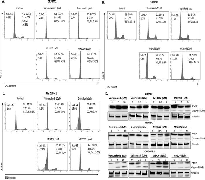 BRAFi, MEKi and AKTi induce cell cycle alteration and apoptosis.