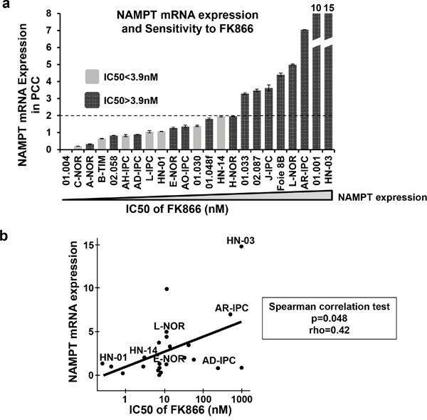 NAMPT mRNA expression levels in PCCs.