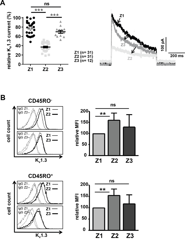 Memantine therapy transiently reduces Kv1.3 channel conductivity of CD4+ T cells.