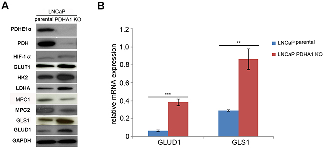 The results of western blotting and RT-PCR assay.