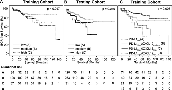 Kaplan-Meier survival of BCR-free survival in prostate cancer patients treated with radical prostatectomy and stratified by trichotomized CXCL12 DNA methylation levels (mCXCL12low, mCXCL12medium, and mCXCL12high) in the training cohort (A) and in the testing cohort (B).