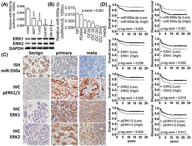 The expression of miR-550a-3p is downregulated in breast cancer and negatively corrected with ERK1 and ERK2.