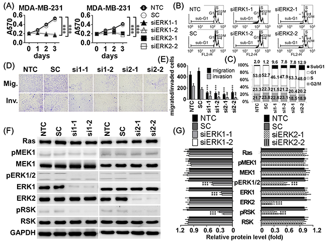 Knockdown ERK1 and ERK2 resulted in similar inhibitory effects of miR-550a-3p.