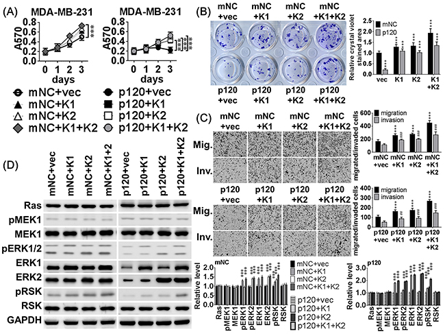 MiR-550a-3p inhibitory effects were attenuated by compensatory ERK expression.