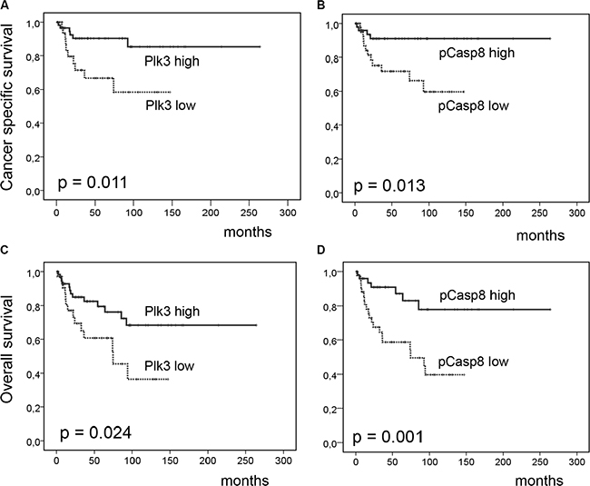 Cancer-specific and overall survival according to Plk3 and pT273 caspase-8 expression.