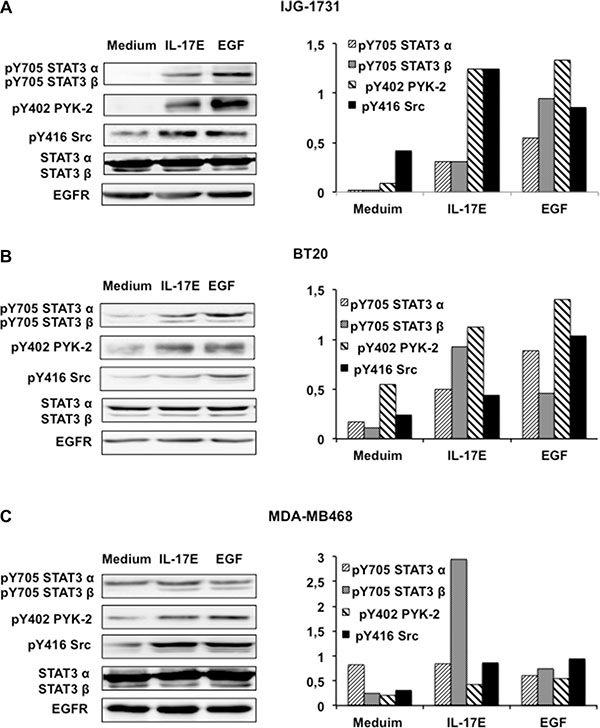 IL-17E phosphorylates the kinases essential for EGFR activation.