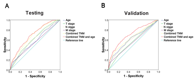 ROC curve analysis for different clinicopathological features was performed to evaluate the survival status.