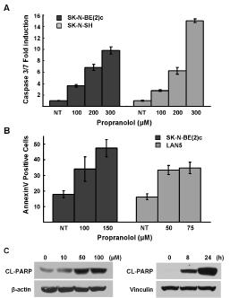 Propranolol induces apoptosis.
