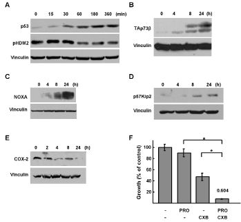 Regulation of p53 family signaling by propranolol.