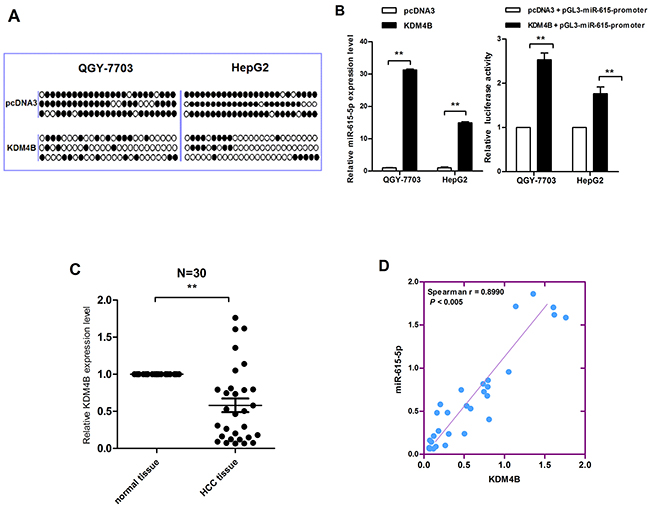 The correlation between KDM4B downregulation and miR-615-5p silencing.