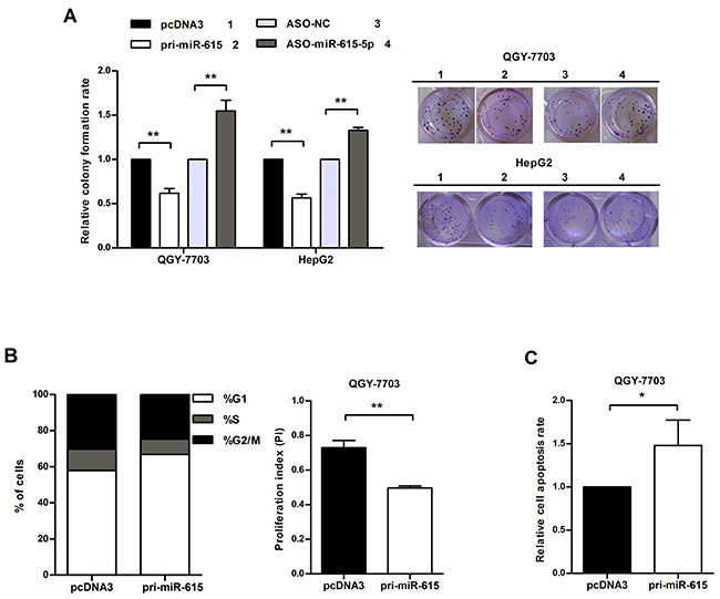 miR-615-5p suppresses HCC cell growth by blocking cell cycle progression and activating apoptosis.